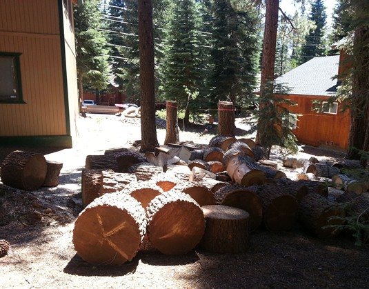 Rounds to be split and the 2 tree stumps marked for removal.