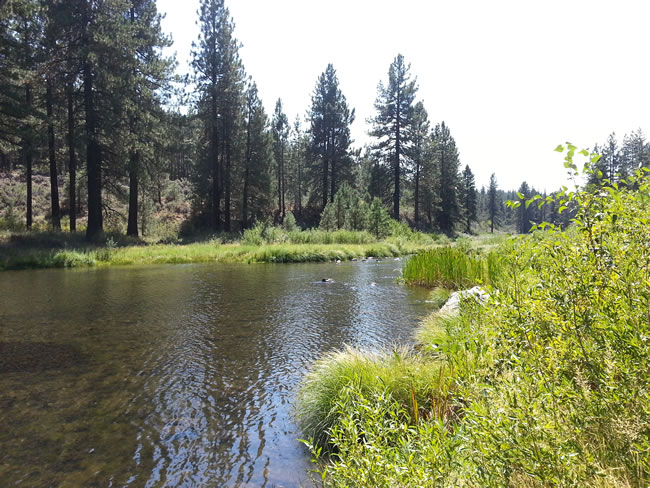 Feather River-so beautiful!