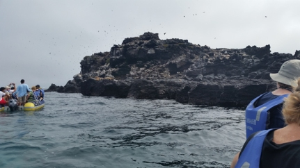Sea lions on the ledges