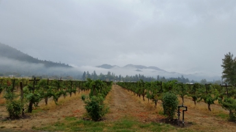 View from outside the tasting room