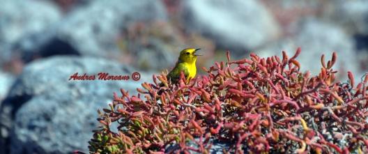 Bird, Warbler?